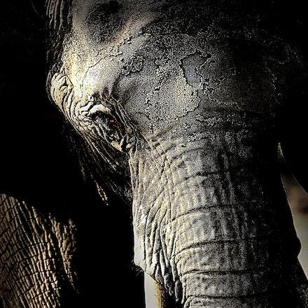 Old_Elephant
