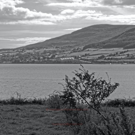 Carlingford Lough from near Rostrevor