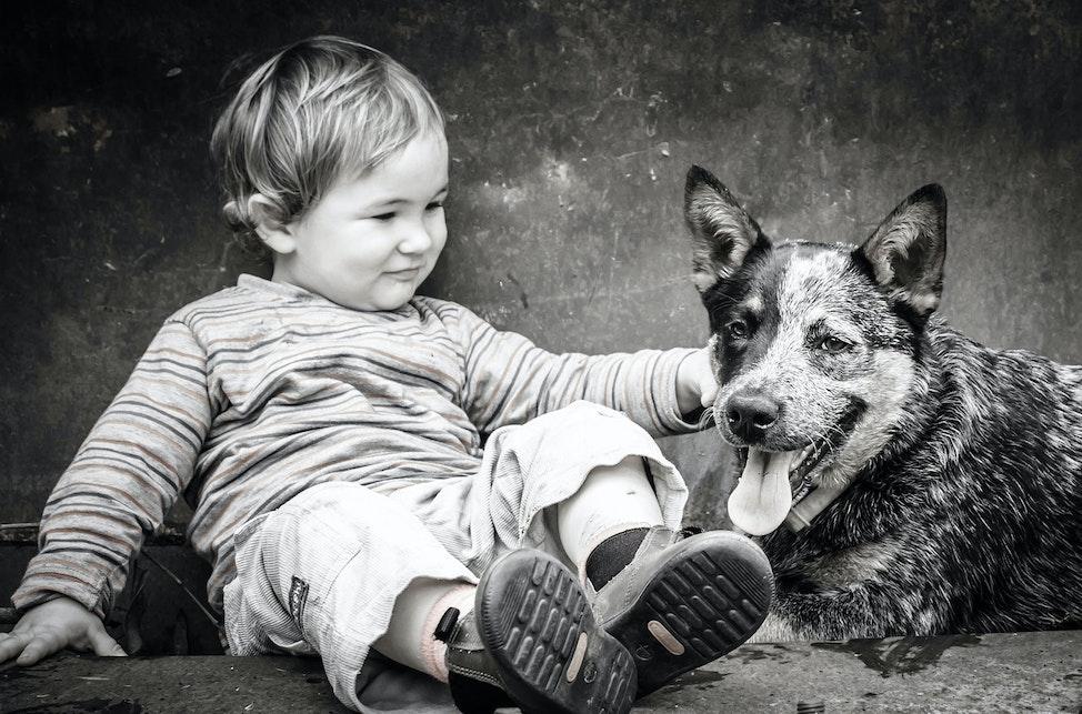 rach_dog_w