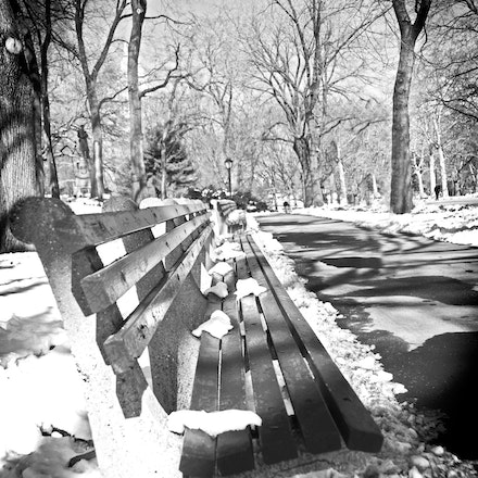 Bench in Central Park, New York City - Copyright © 2015 Melissa Fiene Photography. All rights reserved. All images created by Melissa Fiene are © Melissa...
