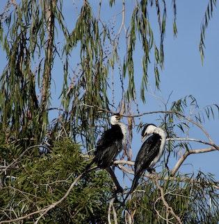 Two Birds 1
