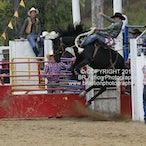 Buchan APRA Rodeo 2015
