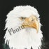 American Eagle - American Eagle is available in two sizes Full - 19x25 and Demi 13x17 This is the approximated image only size.