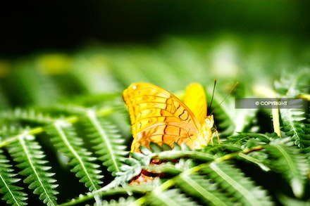 8 - yellow-butterfly