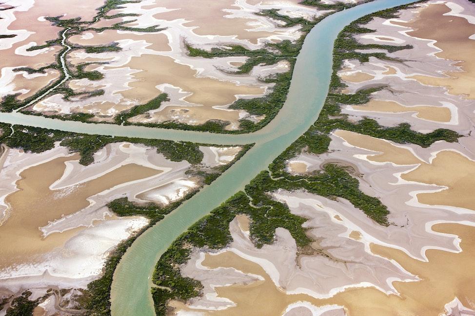 Mangroves_49043 - Australia