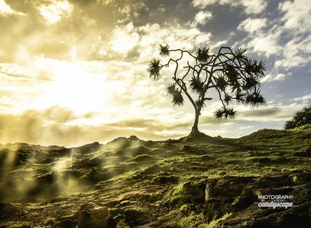 hazy dreams by www.candyscapedesigns.com.au (1 of 1)