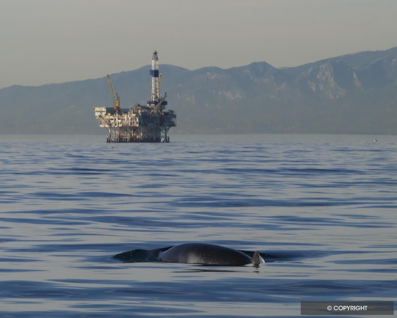 Whale & Oil - Oil rig & Meinke whale in Channel Islands National Marine Sanctuary, near Ventura, California