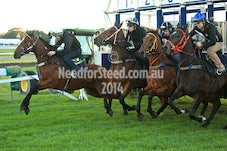 2 MAY RANDWICK TRACK WORK