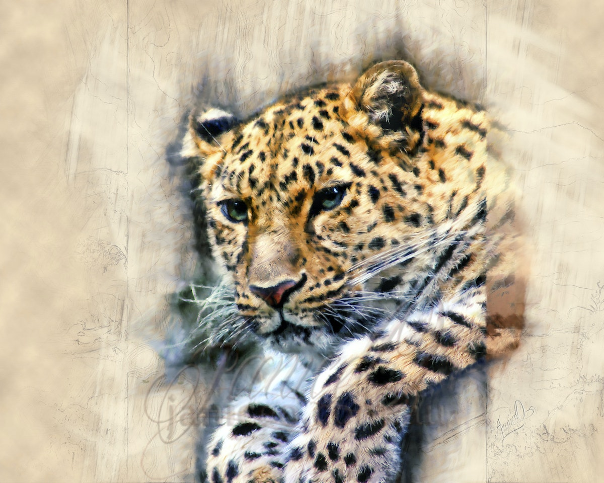 Day Dreaming - Throughout history, leopards have been depicted in artwork, mythology and folklore in numerous countries. They are also now commonly used...