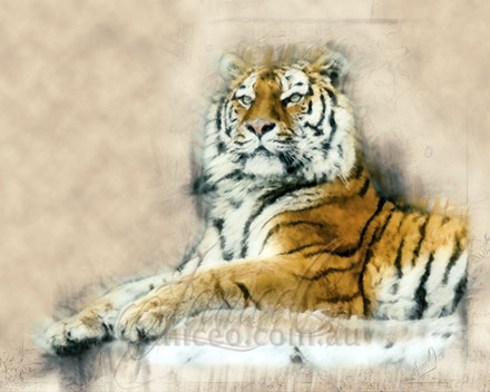 Something this way Comes - They are powerful nocturnal hunters that travel many miles to find buffalo, deer, wild pigs, and other large mammals. A Bengal...