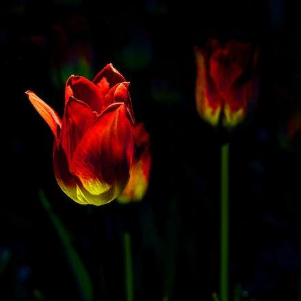 41615flowers (7)