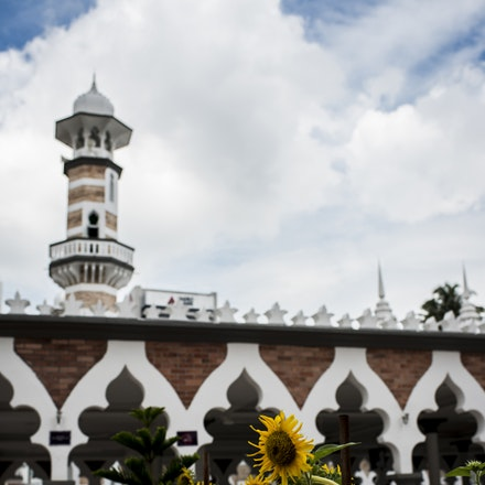 Sunflowers and Mosques