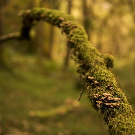 Branch fungi