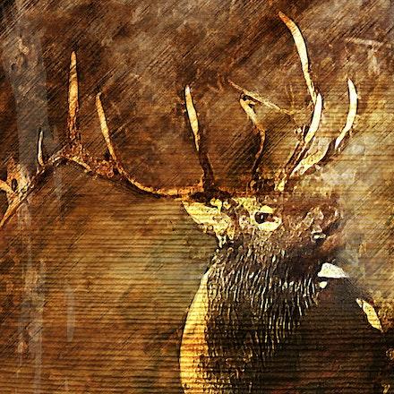 Rustic Elk 30x40